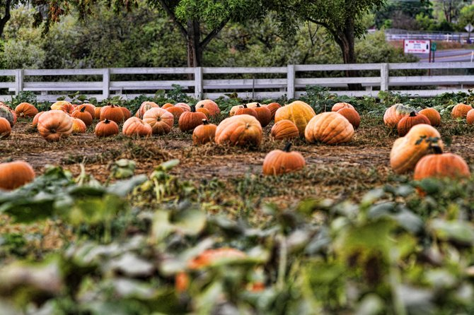the pumpkin patch in Ramona Ca