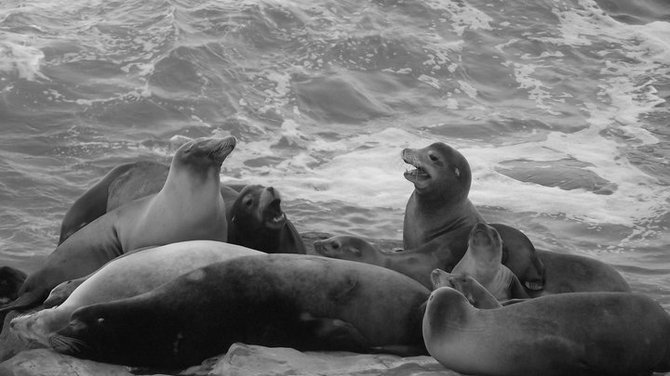 a day with seals in La Jolla