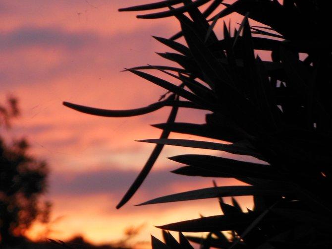 Ultraviolet Sky (Bonita)