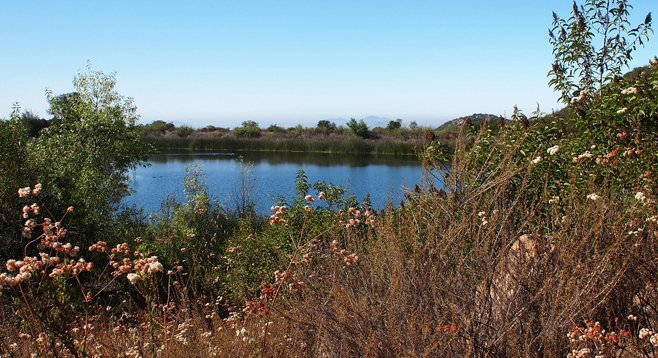 Twenty-five miles of trails wind through the Daley Ranch nature preserve in Escondido. The Sage Trail offers views of Mallard Pond.