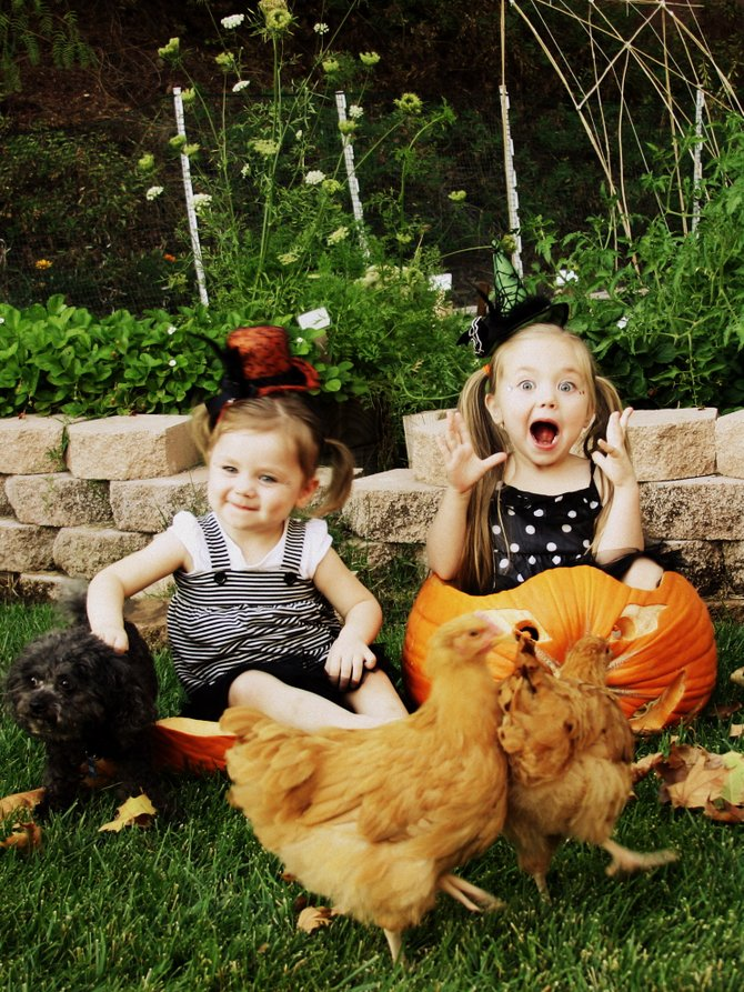 My daughters Cadence and Rylan, our poodle Tucker and the chickens. Every year we put them in pumpkins and take pictures for Fall.