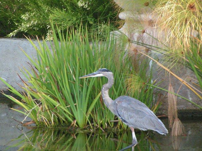 The Birds Of San Diego Taken at Balboa Park