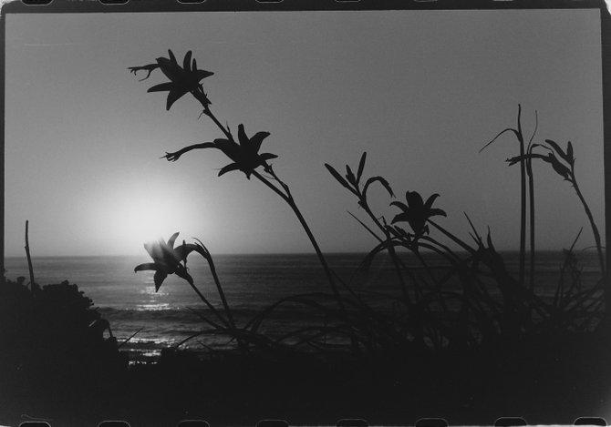 La Jolla Cove sunset  Nikon 35mm film