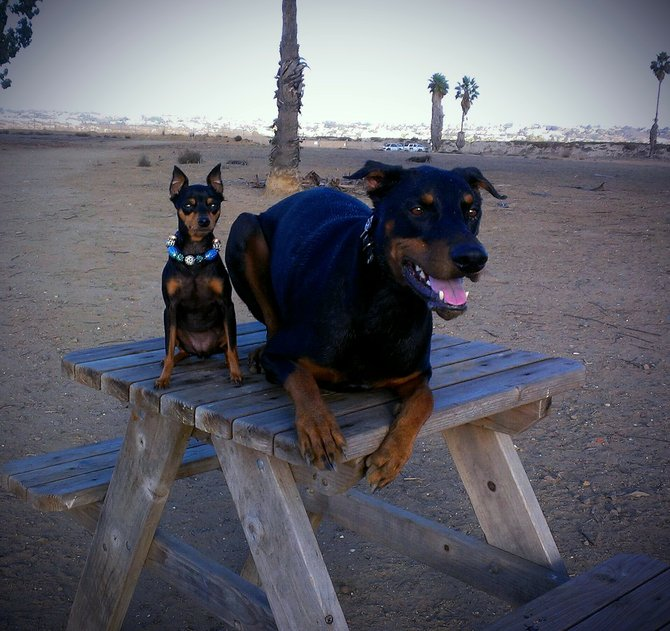 Dogs love san Diego! Mercedes and dexter