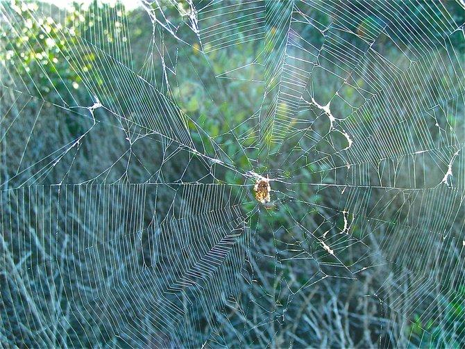 spiders web  Clairmont