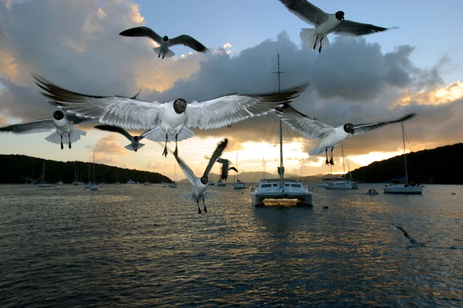 Seagulls coming in for food, anchored at Saba Rock in the British Virgin Islands