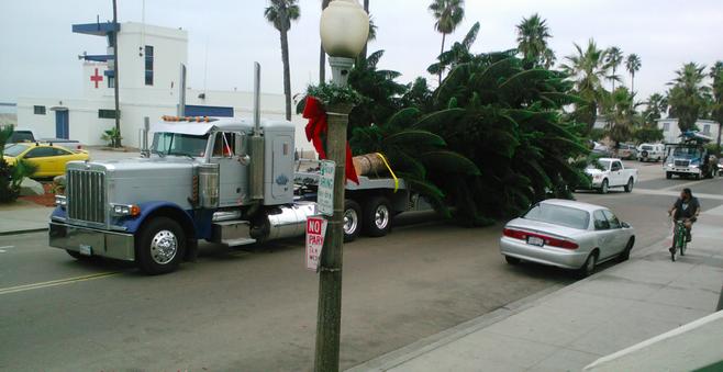 The 2012 O.B. Christmas tree arrives