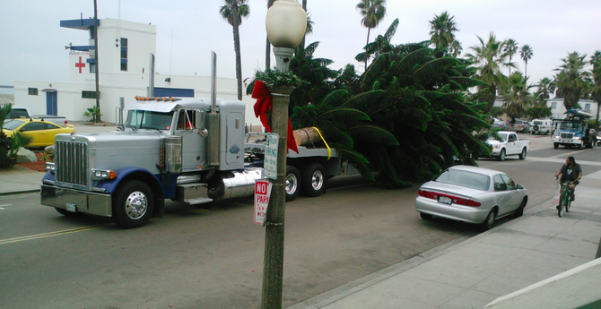 The 2012 O.B. Christmas tree arrives
