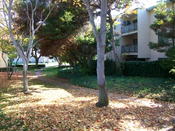 Falling leaves carpet Mariner's Cove apartments in Ocean Beach.