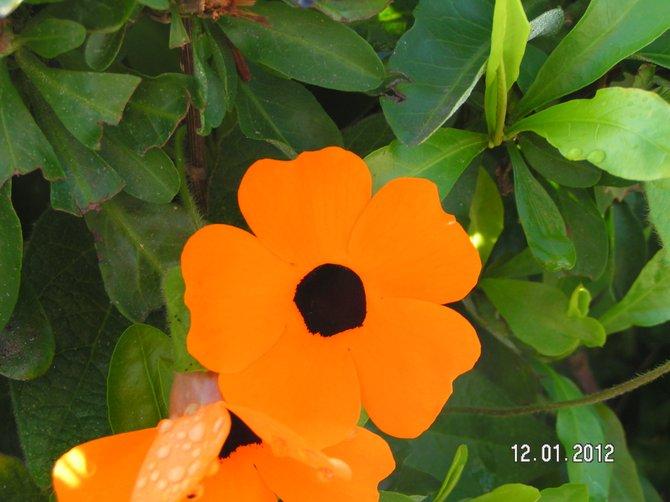 Orange - Clairemont