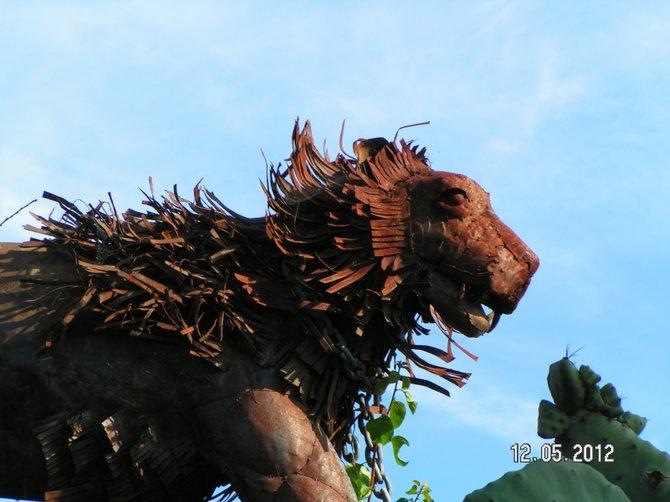 Lion -Clairemont