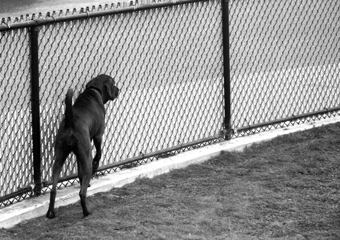 Maggie spots her friend on the other side of the fence at a dog park in Rancho Penasquitos.