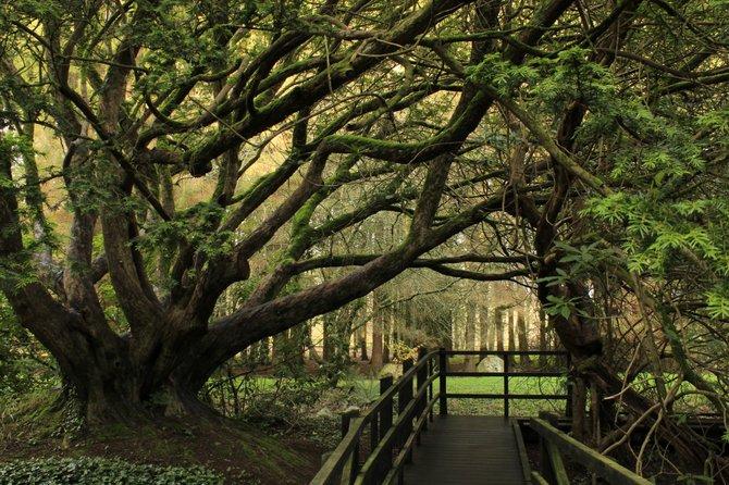 A walk around Blarney Castle in Ireland.