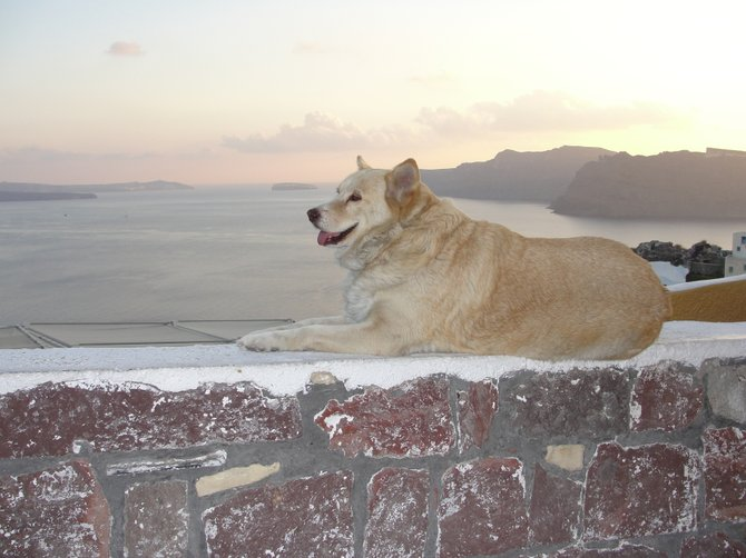 A dog's eye view from the island of Santorini, Greece.