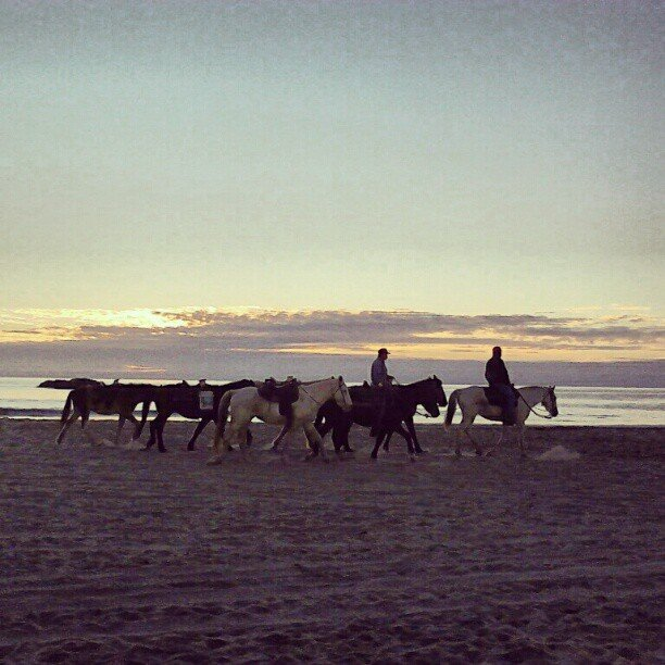 Riding horses in Rosarito, Mexico.