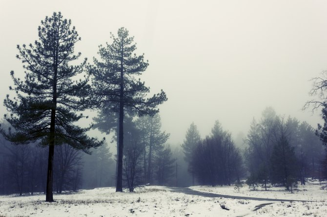 Mt. Laguna last week, 16th 2012, right after the snow fell. it's so lovely up there!