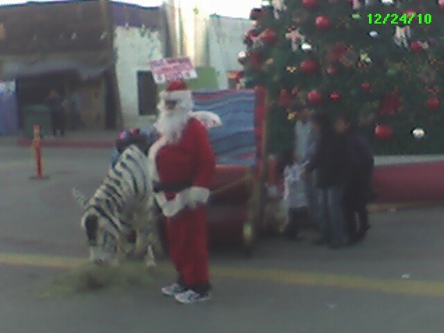 That is a zonkey pulling Santa's Sleigh. Due a complete lack of regulatory controls or governmant oversight Mexico has been home to Significant advancements in genetic egineering.