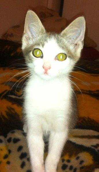 one cute kitten