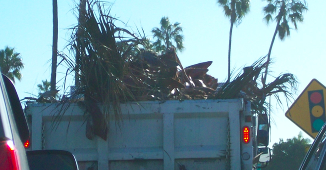 A large city maintenance truck with a cargo of browned fronds