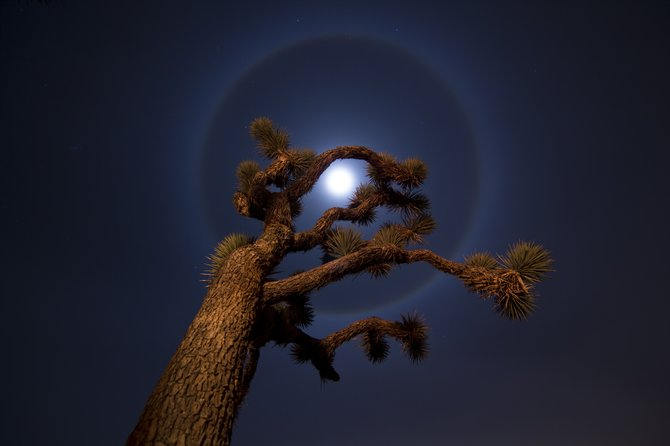 Just outside of Joshua Tree National Park, 12/21/12. This lunar halo, caused by reflection and refraction from tiny ice crystals in the sky, appeared early in the night and continued for hours.