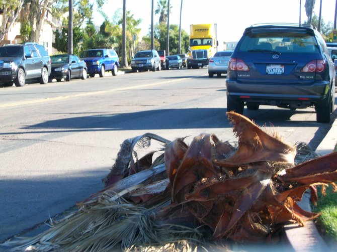 Messy and dangerous palm fronds litter West Pt. Loma Blvd. after a storm.