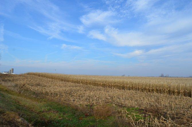 Illinois Cornfield  Near Norway, Illinois, about 70 miles east of Chicago.