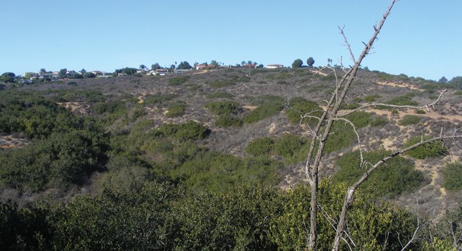 In many ways, Kate O. Sessions Memorial Park, situated in the hills bordering Pacific Beach and La Jolla, is a perfect reflection of its namesake.