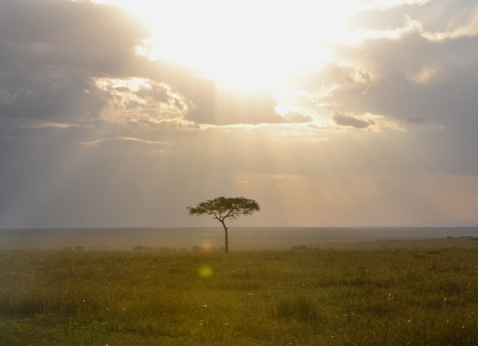 African Light
