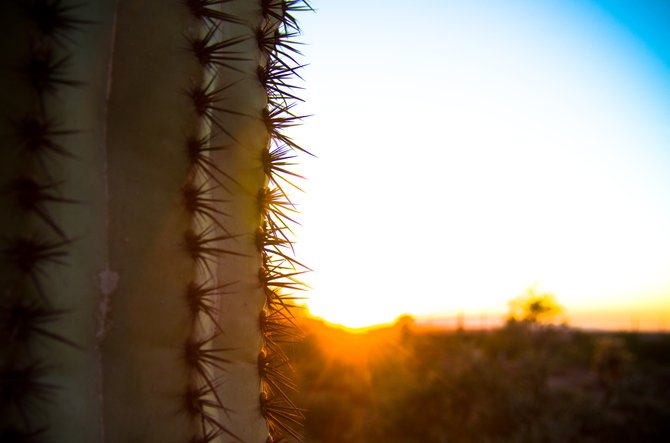 Arizona cactus against the sunset.
