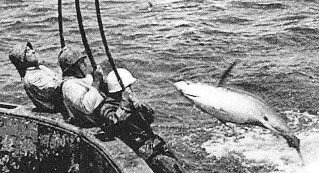 Anatomy Of A Tuna Clipper San Diego Reader
