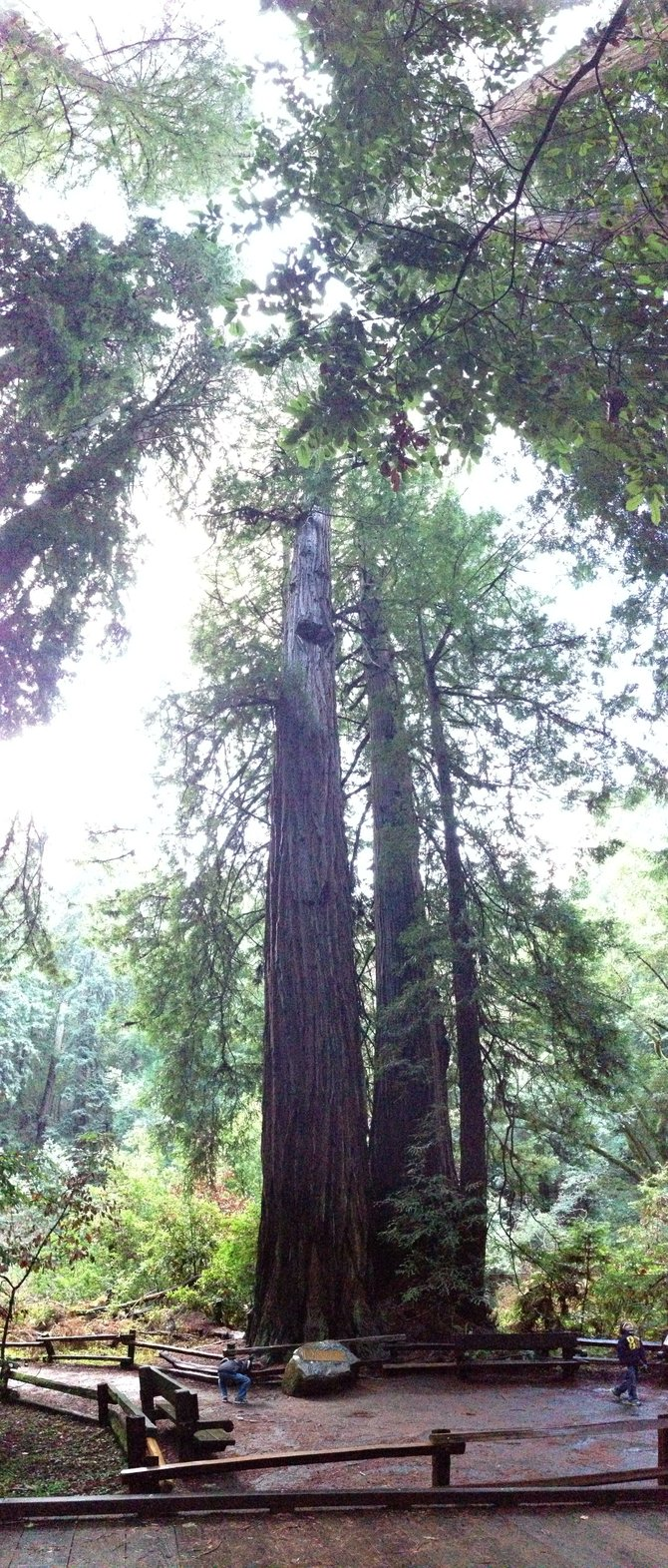 Muir Woods outside of San Francisco.  (12/26/12)