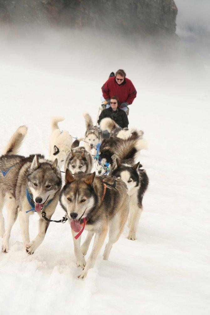 Dogsledding action in Godwin Glacier, Alaska.