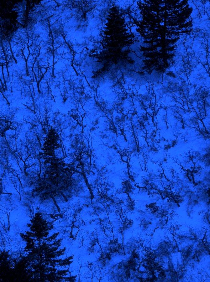 Nervous trees, Sandia Ridge