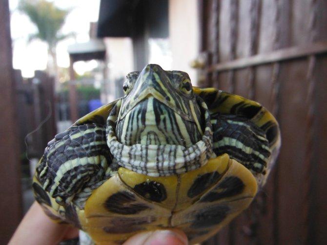 Turtle Neck. San Diego CA, Downtown.