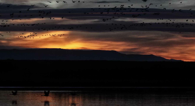 In New Mexico's Bosque del Apache National Wildlife Refuge, thousands of birds take flight at sunrise.