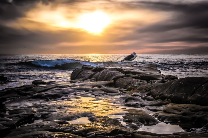 """California Winter"" Taken just south of Windansea Beach in La Jolla, Ca on a beautiful winters day."