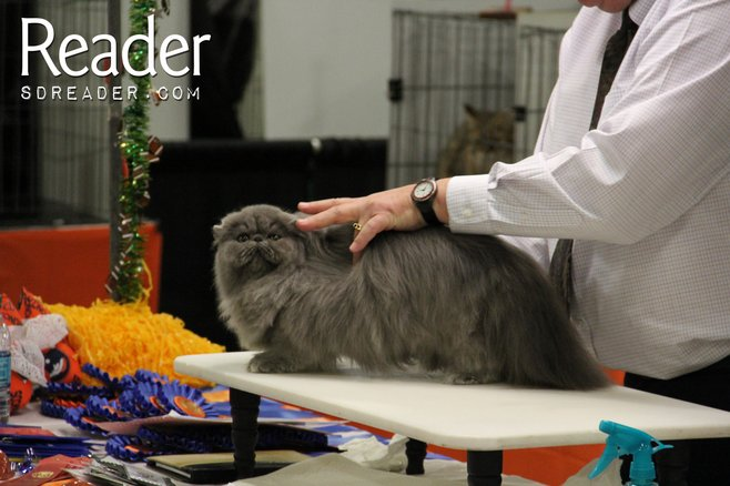 A Magical Afternoon at the Cat Show photo