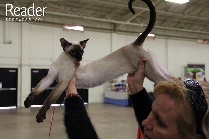 Stoic cat.