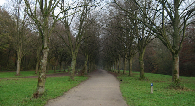 Into the woods in Amsterdamse Bos, a refuge from the city's array of street traffic.