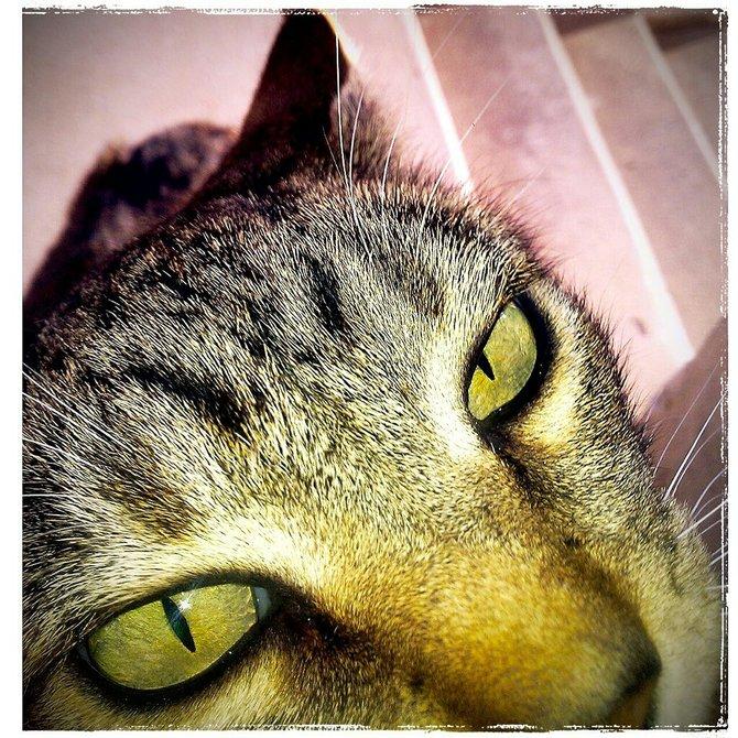 Friendly Stray Cat