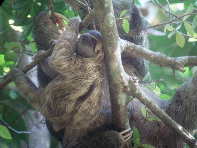 A sloth at Manuel Antonio National Park in Costa Rica