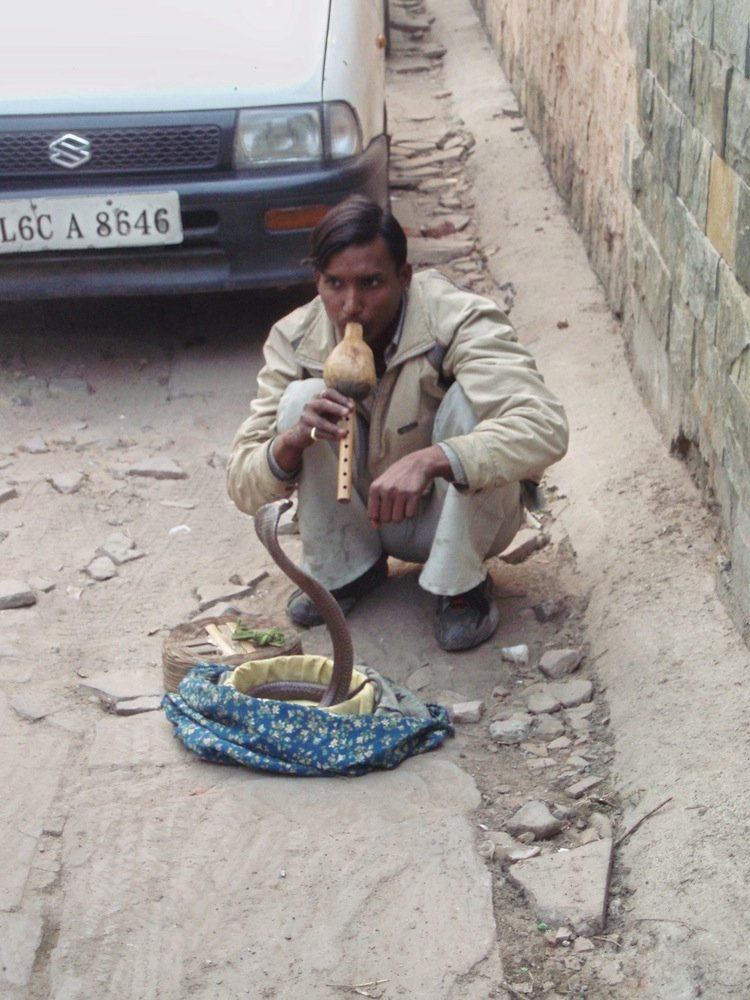 Delhi snake charmer (no doubt worth the price of the photograph).