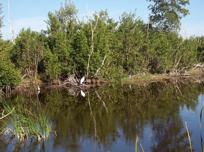 Everglades bird watching