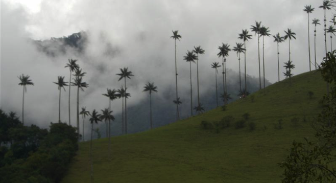 Mist rolls over the hillside in Salento, Colombia.