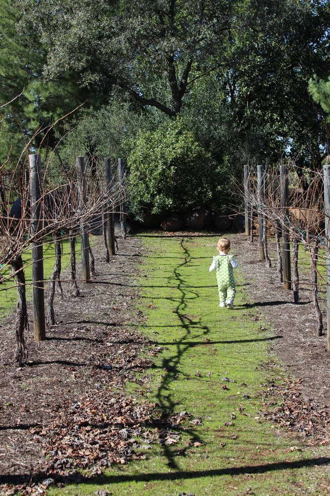 Inspecting PaPa's vineyard in Alpine.