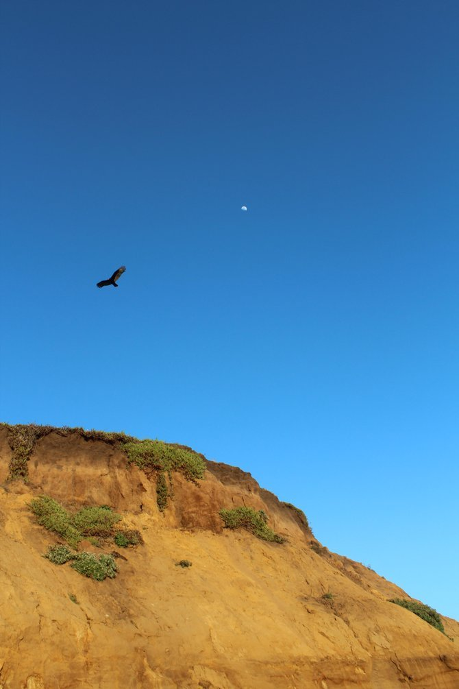 A bird caught in flight in front of the moon at Half Moon Bay, California.