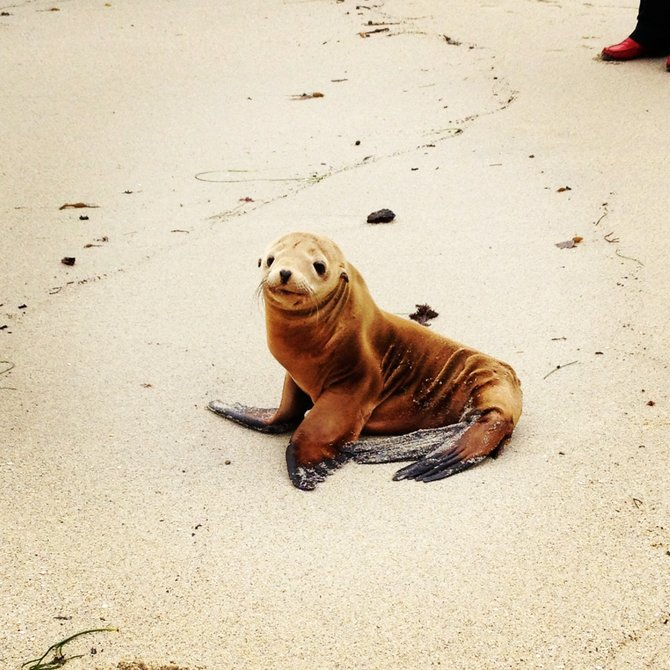 La Jolla Baby seal, up close & personal :)