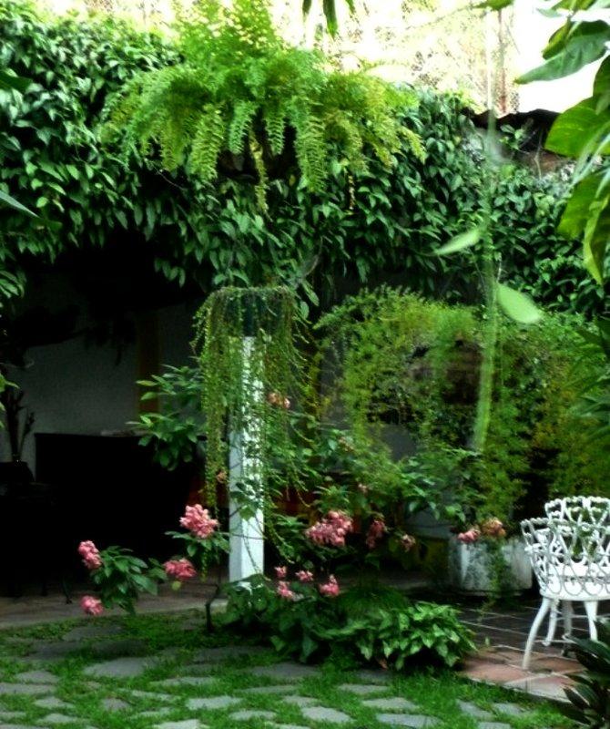 Garden Area of Arbol de Fuego