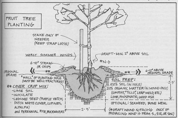 Apple planting diagram