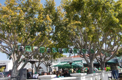 Even the trees are wearing green...